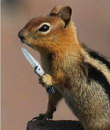 Squirrelfriends